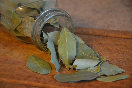Como eliminar la ansiedad con hojas de laurel
