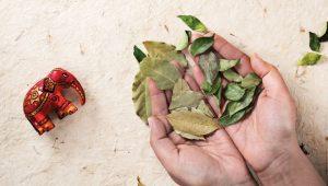 Beneficios del laurel y como usarlo