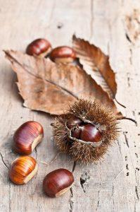 ¡Castaña de Indias, poderosa Pastilla Natural para Mejorar la Circulación y Eliminar las Varices de las Piernas!