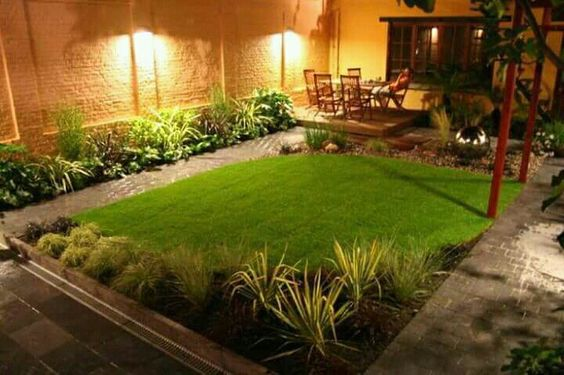 plantas pequeñas para el jardín del patio